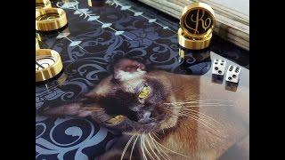 """Нарды (Backgammon) """"Кошка"""" купить в Москве с разработкой эксклюзивного дизайн-проекта под заказ."""