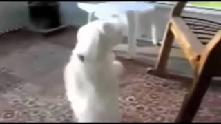 Приколы видео, Смешные животные, Танец Животных