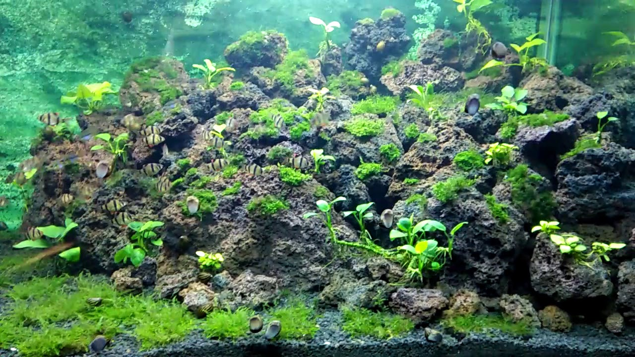 aquascape lava rock - YouTube