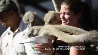 South African Explorer | Nomad Adventure Tours