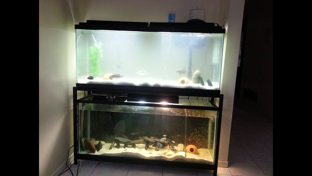 Dual 55 gallon tank setup start to finish all tanks for Double fish tank stand