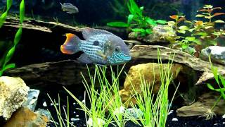 Update Central American/ South American Cichlid Tank