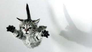 Кошки видео приколы!Невероятные безбашенные прыгуны!