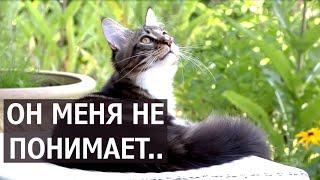 Что кот Вилли думает про Анфису