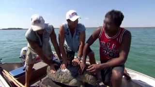 Spearfishing and sea turtles ► All 4 Adventure TV