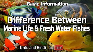 Difference Between ( Marine Life & Fresh Water Fishes ) !!! Urdu and Hindi