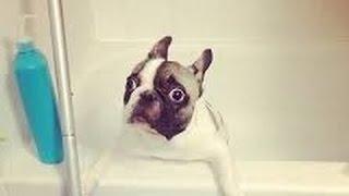 Σκυλιά Πραγματικά Δεν Θέλουν Να Κάνουν Μπάνιο - Αστεία Κολύμβησης Σκυλί Κατάρτιση Τμήμα 3