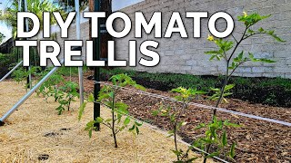 3 DIY Tomato Trellis Ideas, Perfect for ANY Budget 🍅