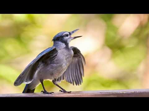Почему птица бьется в окно с научной точки зрения?