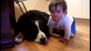 Cachorro lambendo bebê