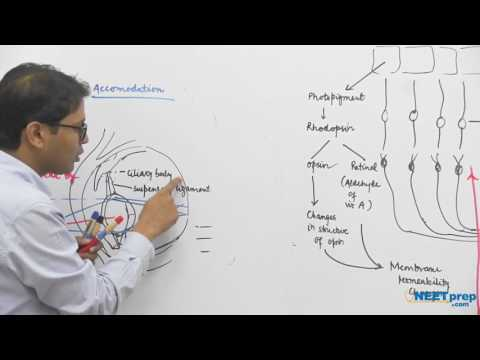 Mechanism of Vision | Neural Control & Coordination – NEET & AIIMS preparation videos