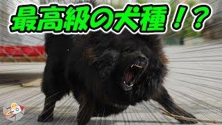犬は日本で最も人気のあるペットですが、世界には様々な品種の犬が存在...