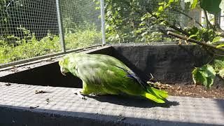papageien partnervermittlung bochum