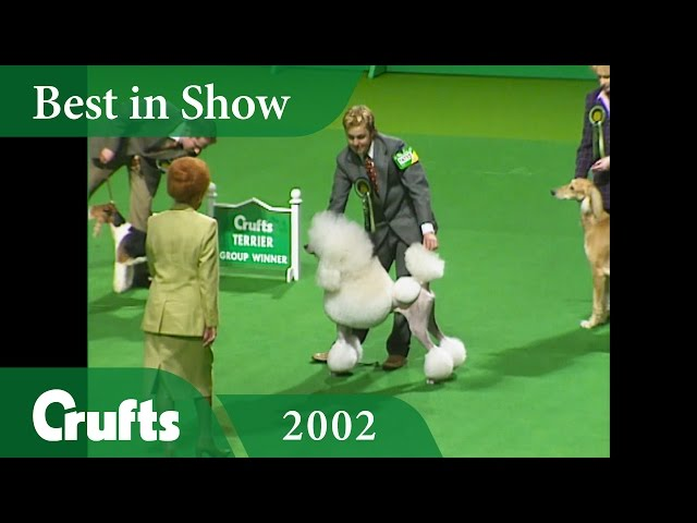 Standard Poodle wins Best in Show at Crufts 2002 | Crufts Classics