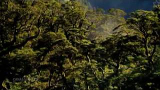 Celestia Organa - Magna Canta