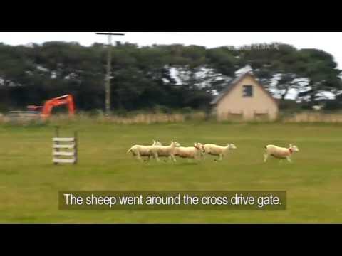 Henry van der Merwe & Lass - South Africa - Day 1 & 2