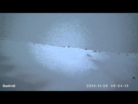 Снежные барсы в Кольсай кольдери (Казахстан)