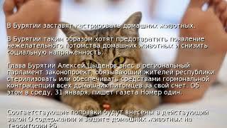 В Бурятии заставят кастрировать домашних животных