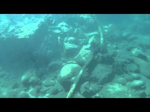 Sea Wasp Jellyfish In Caribbean (carybdea Alata)
