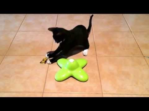 Butterfly toy for cats and kittens, from Zooplus