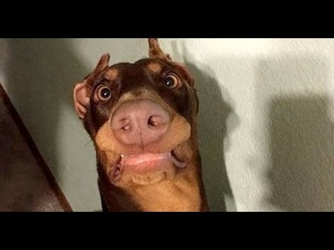 Funny Dogs Videos Compilation 2017 [ NEW HD ]