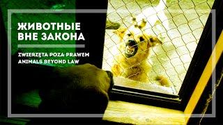 Zwierzęta poza prawem – Animals Beyond Law (PL, EN subs) HD