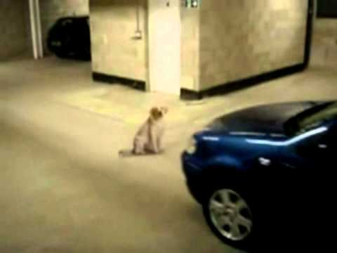 Dog Almost hit by Car then Kicked by Owner