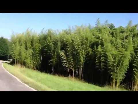 Between Waynesville and Clyde North Carolina June 23, 2013