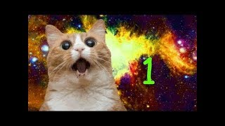 DANKEST CAT MEMES
