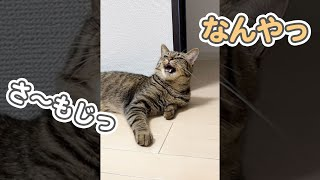 【神回】名前を呼ぶと、最高の笑顔でしゃべる猫が可愛すぎます… #Shorts
