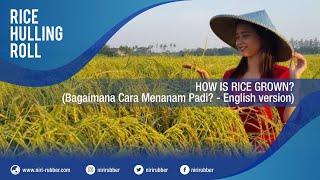 Bagaimana Cara Menanam Padi? (How Is Rice Grown? - Indonesian version)