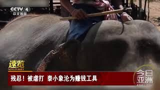 [今日亚洲]速览 残忍!被虐打 泰小象沦为赚钱工具| CCTV中文国际