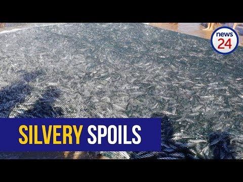 WATCH: KZN witnesses bumper Sardine Run