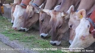 Гранулированные корма для животных Жалал-Абад