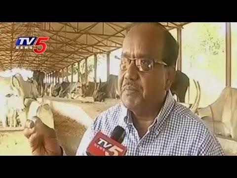 Special Focus On AP IT Advisor JA Chowdary Organic Farming | Annapurna | TV5 News