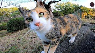 【今週のボツ動画】短い野良猫動画まとめ公開【湯島他】