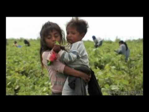 Child Labour in Mexico's Agriculture Part 1 / 2