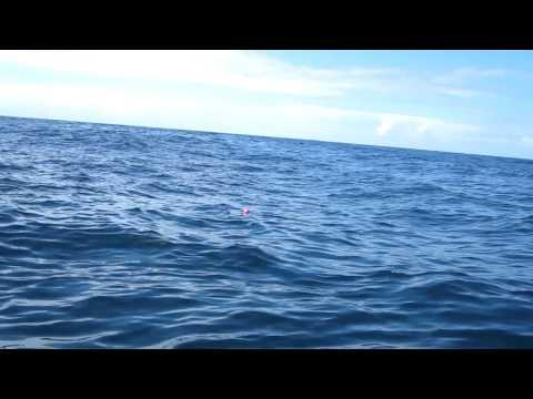 2 metre shark Sydney heads