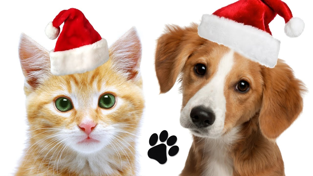 Make A Paw Print Christmas Ornament For Your Pet - YouTube