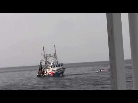 Caplin Fishery 2013