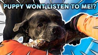 HELP! My Puppy Will Not Listen To Me!