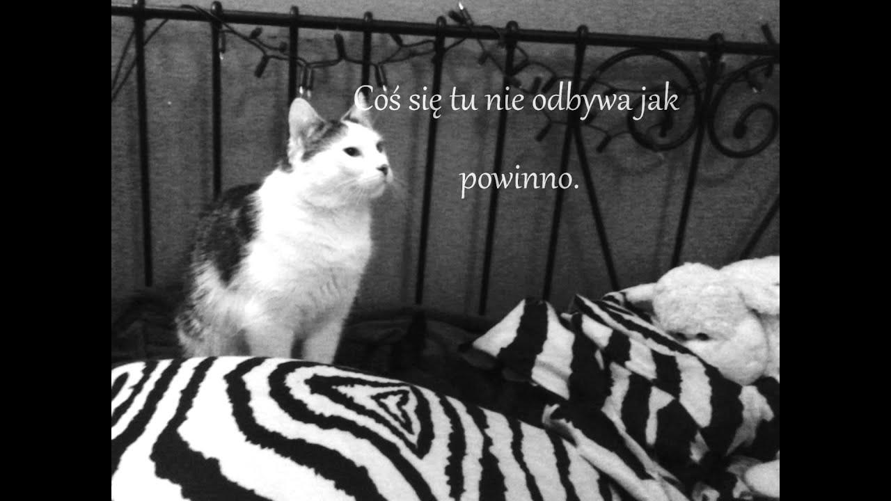 Kot W Pustym Mieszkaniu Youtube