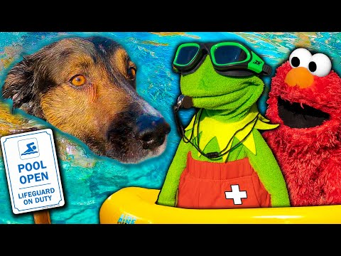 Kermit the Frog and Elmo's Swimming Pool Party! (With Puppy)
