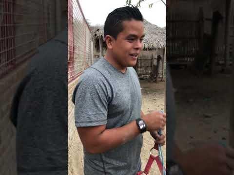 Un Burro desafía a 100 PERROS y así lo hace