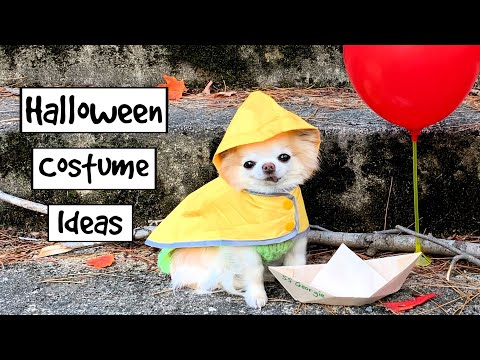Halloween Costume Ideas For Dogs By Chihuahua Cedric