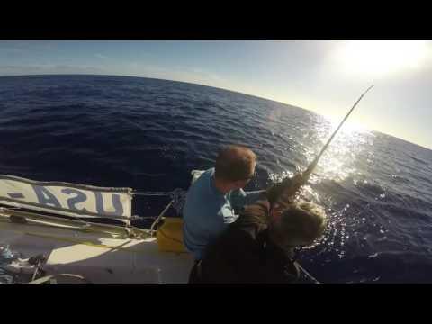 Blue Marlin A2B Return Trip Medley 2016
