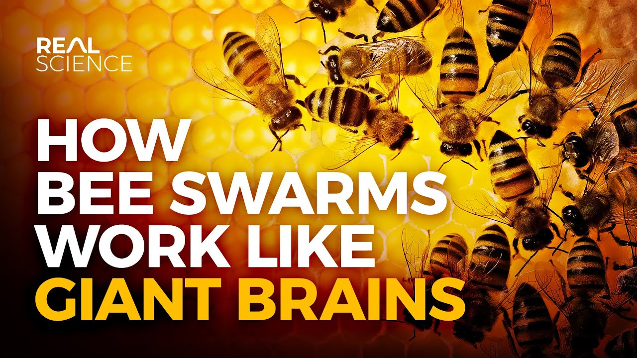 The Extraordinary Power of the Hive Mind