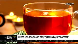 Probe into Rooibos as 'sports performance booster'