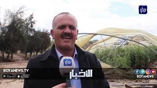 حصر أضرار المزارعين جراء فتح سد الملك طلال بعد امتلائه - (2-3-2019)