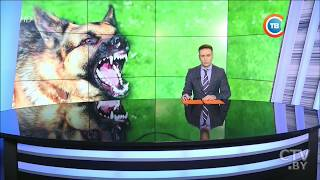 Собака покусала ребенка, а хозяйка пса попыталась скрыться - резонансная история в Бресте